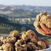 Tečaj kuhanja – Tartuf od A do Ž – Teambuilding program u Istri