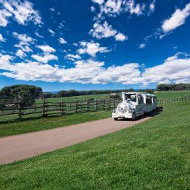 Brijuni National Park, excursion by bus